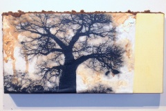 Baobab in Zim | Digital Print, South African Soil & Acrylic mounted on Canvas | 6x9[SOLD}