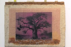 Baobabs' Message #2 | Solar Print Lithograph on Silk mounted on Zebra Dung Paper, South African Soil, Colored Pencil & Immunization Bottles mounted on Canvas | 10.50x12
