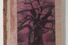 Baobabs' Message 1  Solar Print Lithograph on Silk mounted on Zebra Dung Paper, South African Soil, Colored Pencil & Immunization Bottles mounted on Canvas   10.50x12  [SOLD]