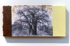 Baobab in Zim | Digital Print, South African Soil & Acrylic mounted on Canvas | 6x9 [SOLD}